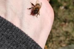 Bienenflug-4