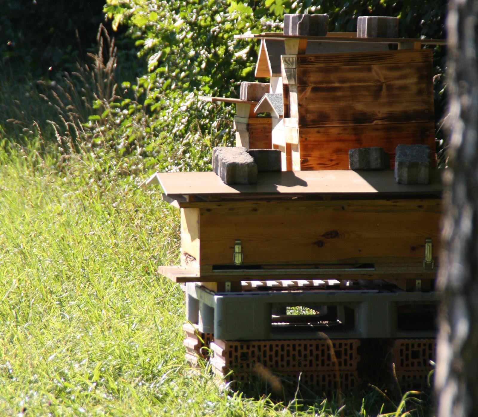 Bienenstand_skaliert