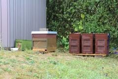 Bienenstand-5